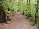Huelgoat - Chemin des violettes